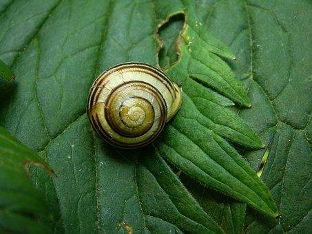 Slug, Animals, Sea Shells