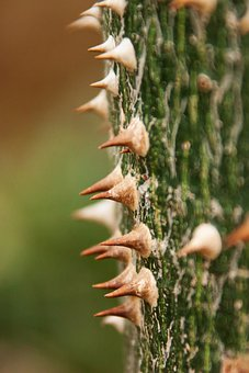 Wood, Plant, Flora, Nature, Spine, Pointed, Hard, Tree