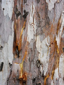 Tree, Bark, Woody, Woods, Wooden, Outermost, Layers