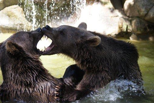 Brown Bear, Water, Animals, Water Games