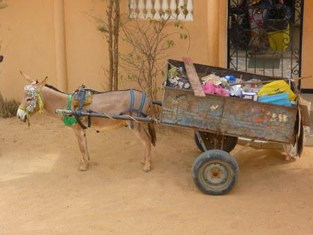 Garbage, Transportation, Donkey, Carriage, Cart
