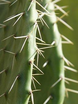 Cactus, Shovels, Chumberas, Skewer, Puncture, Stinging