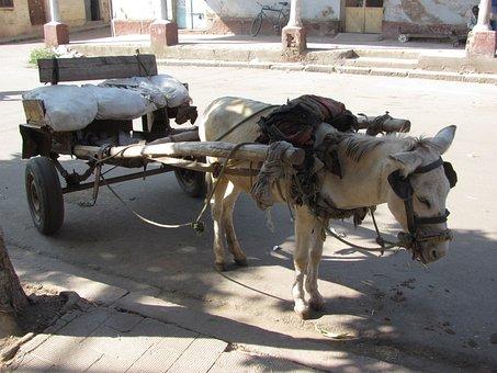Asmara, Eritrea, Donkey, Cart, City, Urban, Street