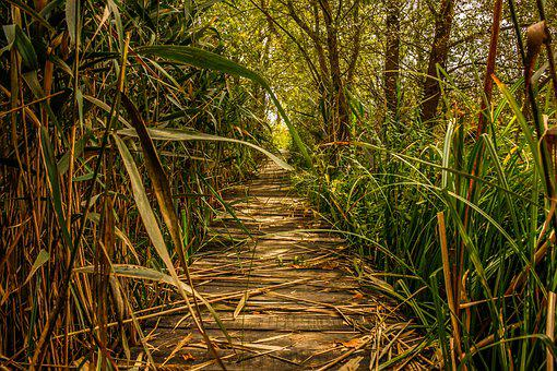 Swamp, Marsh, Green, Nature, Landscape, Outdoors