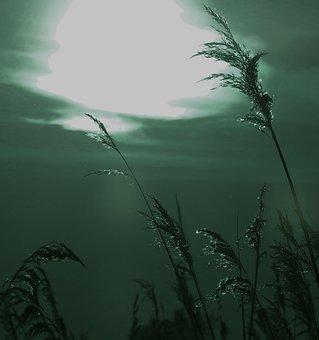 Grasses, Mystical, Distorted, False Color, Green Tint