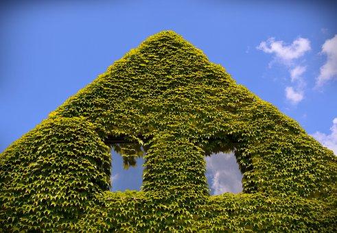 Wine, Gable, Home, Ornamental Wine, Building, Sky