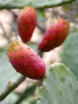 Chumbo, Prickly Pear, Prickly Pear Cactus, Shovels