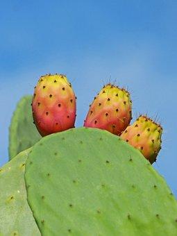 Shovels, Prickly Pear Cactus, Prickly Pear