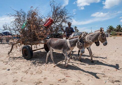 Isla San Carlos, Venezuela, Cart, Man, Donkeys, Sky