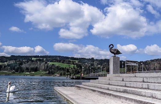 Swan, Waterfowl, White, Black, Lake, Sculpture, Nature