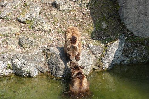Tiergarten, Bear Enclosure, Bear, Zoo, Animal