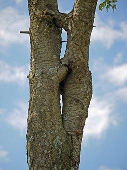 Tree, Separation, Forgive, Overgrown, Symbol, Together
