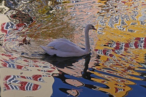 Swan, Water, Mirroring, Distortion