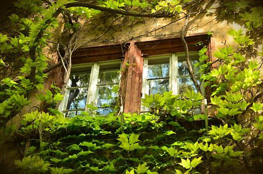 Window, Old, Weathered, Aesthetic, Leaves, Overgrown