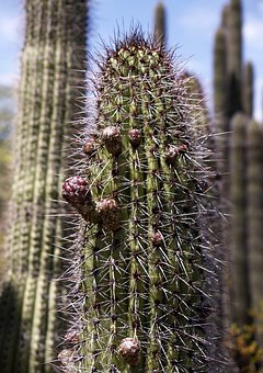Tall, Cactus, Plant, Blossom, Arizona, Usa, Erosion