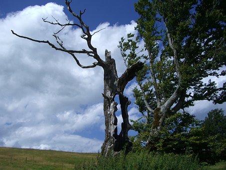 Weather Beech, Hollow Tree Trunk, Sky, Blue, Clouds