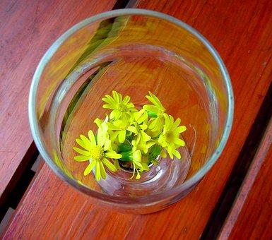 Glass, Flower, Yellow, Daisy, Yellow Flowers, Spring