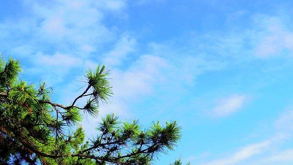 Sky, Pine, Gyeongpodae, Landscape, Wood, Coastal