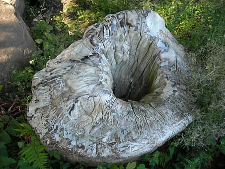 Tree Stump, Hackneyed Trunk, Nature, Natural Phenomenon