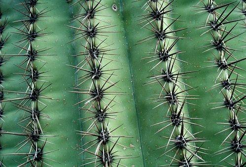 Cactus, Succulent, Prickly, Desert, Plant, Vegetation