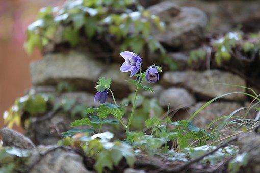 Maebaltop Sky, Flowers, Purple Flowers, Spring