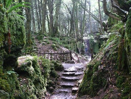 Stairs, Forest, Mystical, Puzzlewood, England