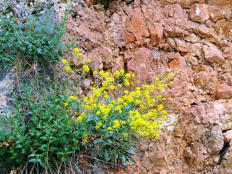 Rocks, Cliffs, Structure, Texture, Wildflowers, Stone