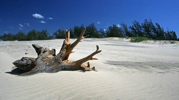Wood, Driftwood, Weathered, Natural, Root, Sand, Beach