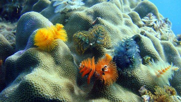 Christmastree Worms, Close-up, Thailand, Sea, Marine