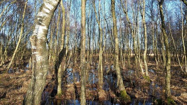 Forest, Venn Birches, Zwillbrock, Westfahlen