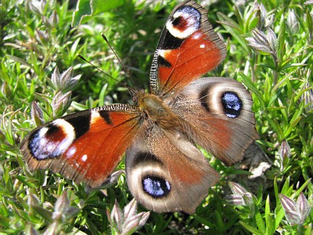 Butterfly, Oct, Animal