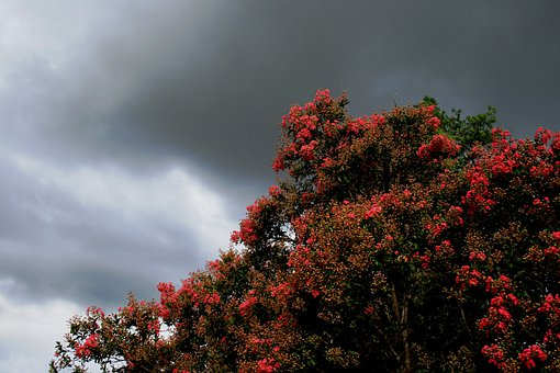 Tree, Flowers, Covered, Green Leaves, Sky, Clouds