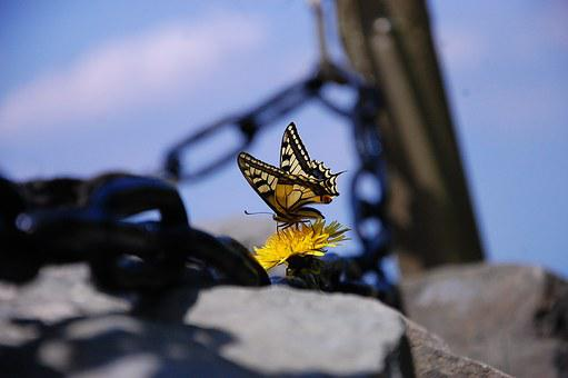 Butterfly, Chain, Flower