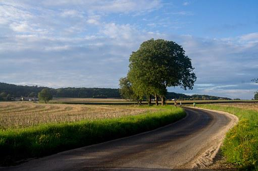 Doubs, Besançon, Tree, Country Road, France, Nature