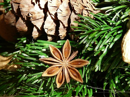 Star Anise, Fruit, Ripe, Advent Wreath, Sternanis Real
