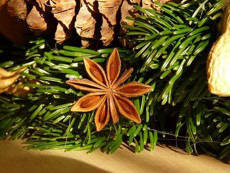 Star Anise, Fruit, Ripe, Advent Wreath, Sternanis Real