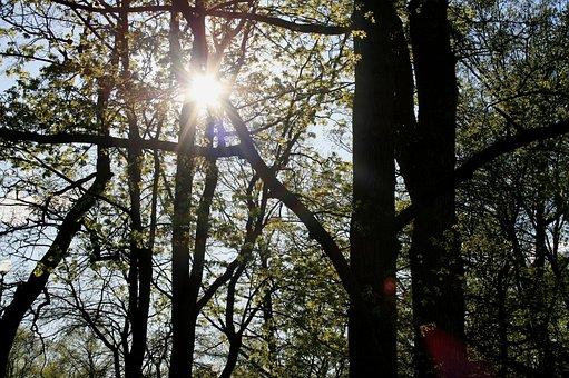 Trees, Foliage, Green, Park, Sun, Penetrating