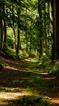 Path, Wood, Forest, Trail, Hiking, Tree, Sunlight