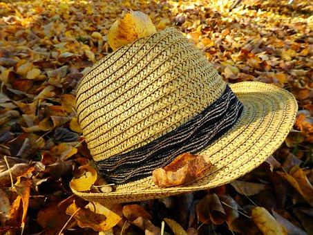 Autumn, Leaves, Wet, Moist, Fall Color, Golden Autumn