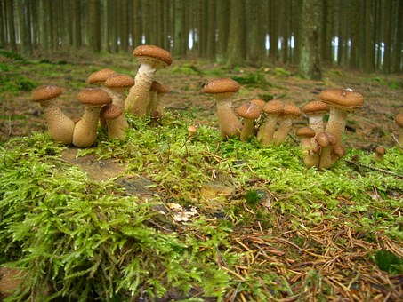 Nature, Mushrooms, Forest, Forest Mushroom, Plant