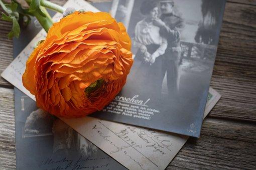 Ranunculus, Flower, Orange, Blossom, Bloom, Petals
