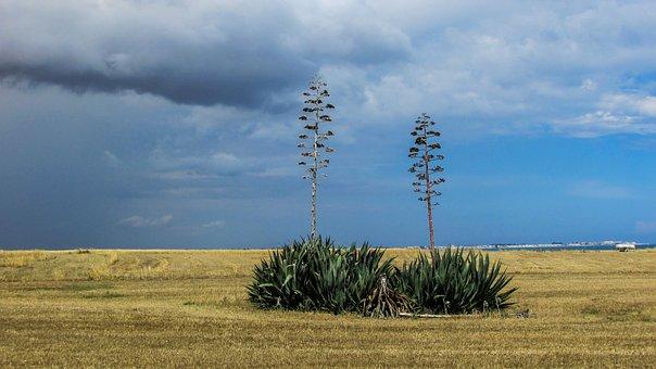 Cyprus, Perivolia, Aloe Vera, Field, Trees, Nature