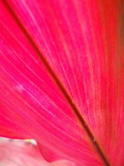 Sheet, Pink, Veins, Nature