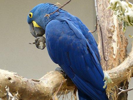 Bird, Parrot, Plumage, Ara, Animal, Feather, Blue