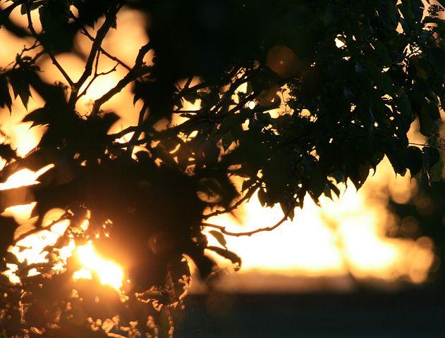 Foliage, Tree, Sunset, Orange, Gold, Sunlight, Sun