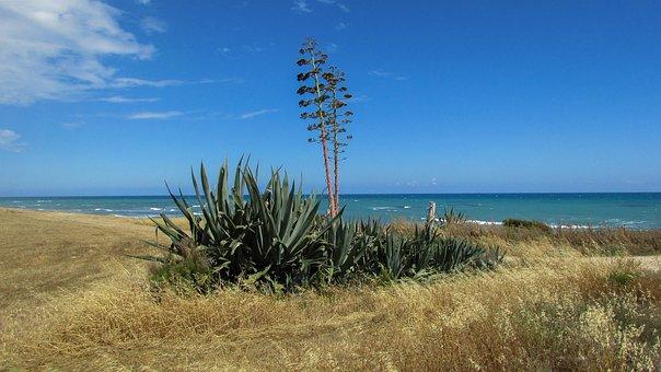 Cyprus, Perivolia, Aloe Vera, Field, Tree, Nature