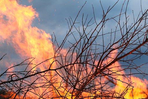 Fire, Brand, Bush, Wood Fire, Flame, Hot, Aesthetic