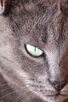 Cat, Lilith, Eye, Feline, Hairy, Pet, Animal