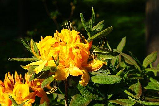 Flower, Yellow, Plant, Summer, Flowers, Blooms, Garden