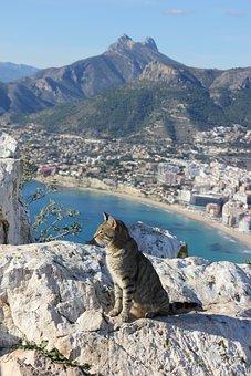 Cat, Feline, Calpe, Alicante, Spain